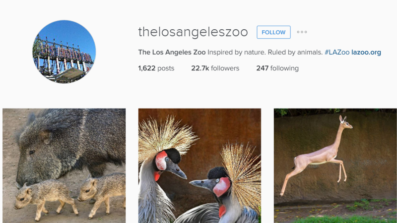 Los Angeles Zoo – Instagram